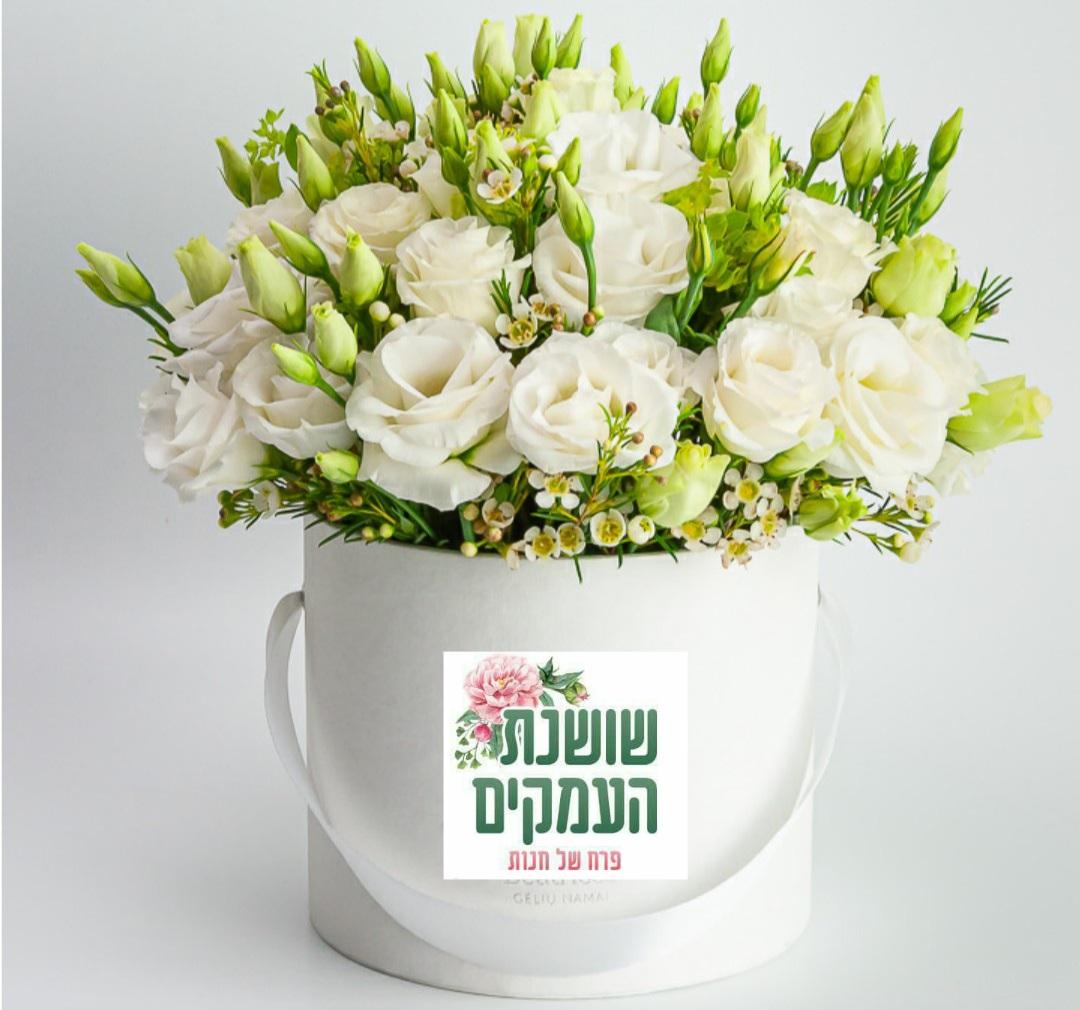 קופסאת פרחים-דגם ליאה