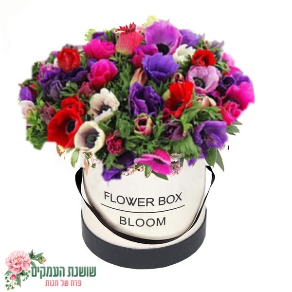 קופסאת פרחים-כלניות