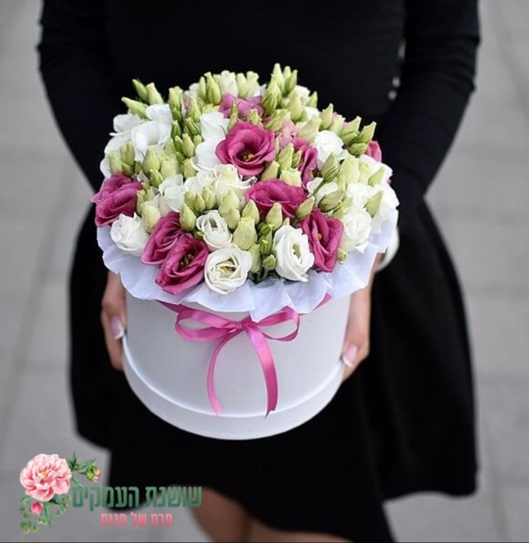 קופסאת פרחים-דגם פריז