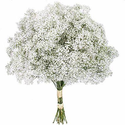 מבחר פרחים בתפזורת
